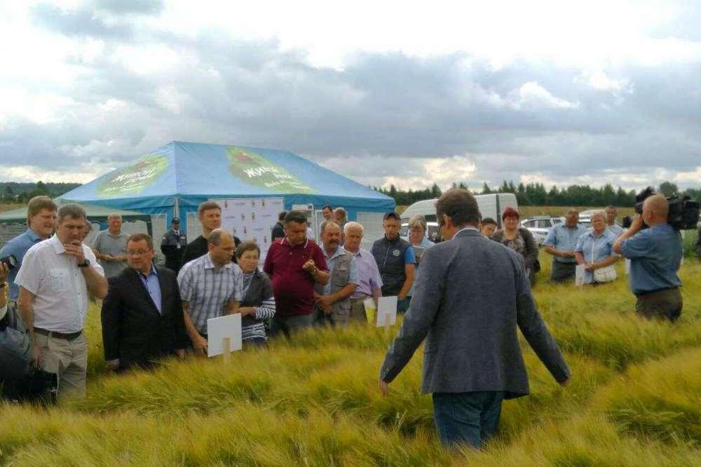 экспериментальный гектар с пивоваренным ячменем в Ярославской области